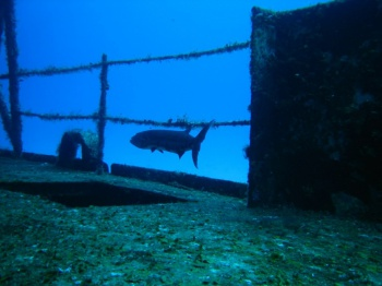 Wreck Diving by TS Lane