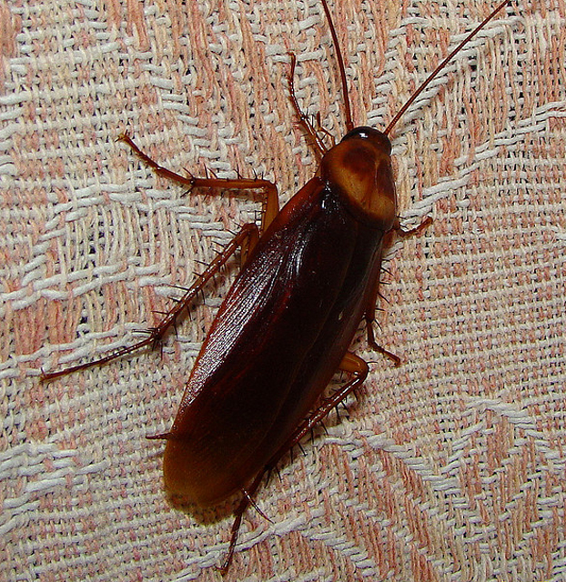 Vancouver Pest Control Tips Amp Tricks Vancouver Homes