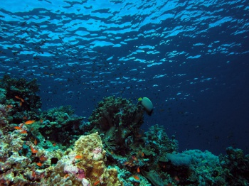 Under the water by Derek Keats