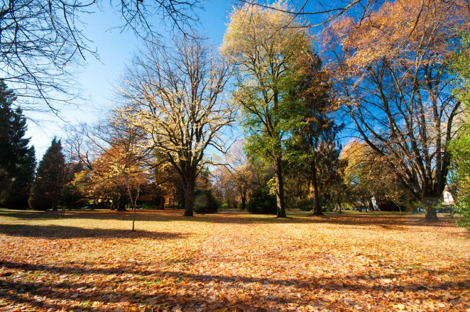Fall foliage in the Crescent