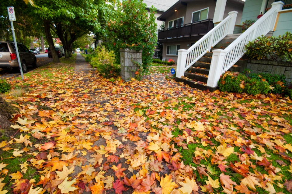 Frontyard full of fallen leaves