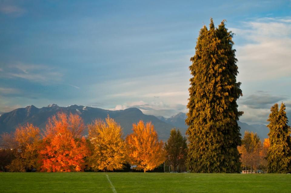 Kensington Park in fall colours