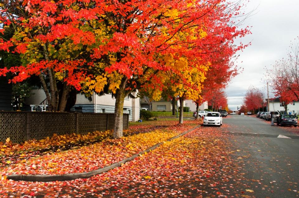 Street full of fallen leaves