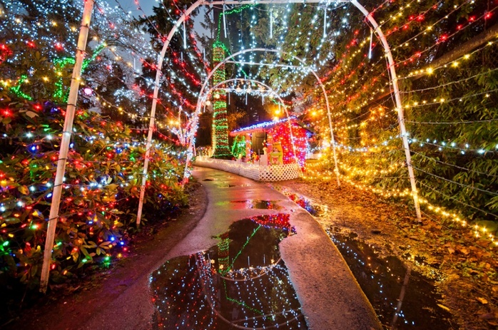 Bright lights in Stanley Park