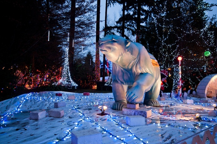 Polar bear in Stanley Park