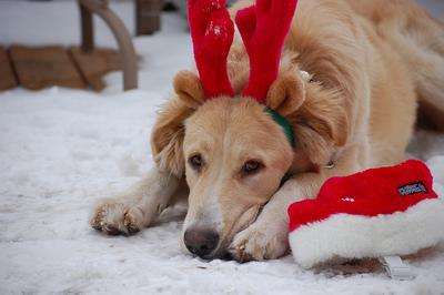 christmas doggie