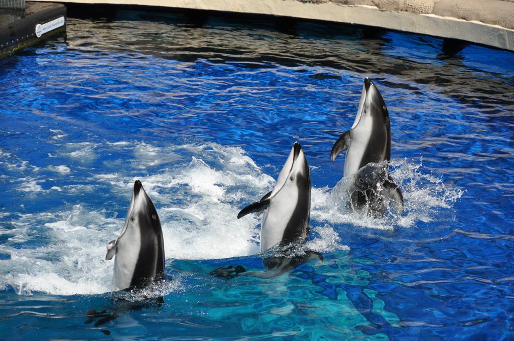 Richmond Aquarium