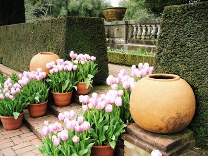 Filoli Garden