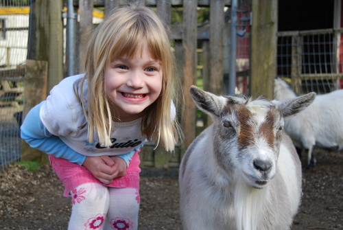 Girl Goat Taylor