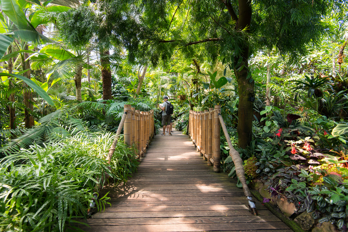 Walking Paths of Bloedel Conservatory