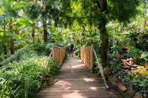 Walking-Paths-of-Bloedel-Conservatory