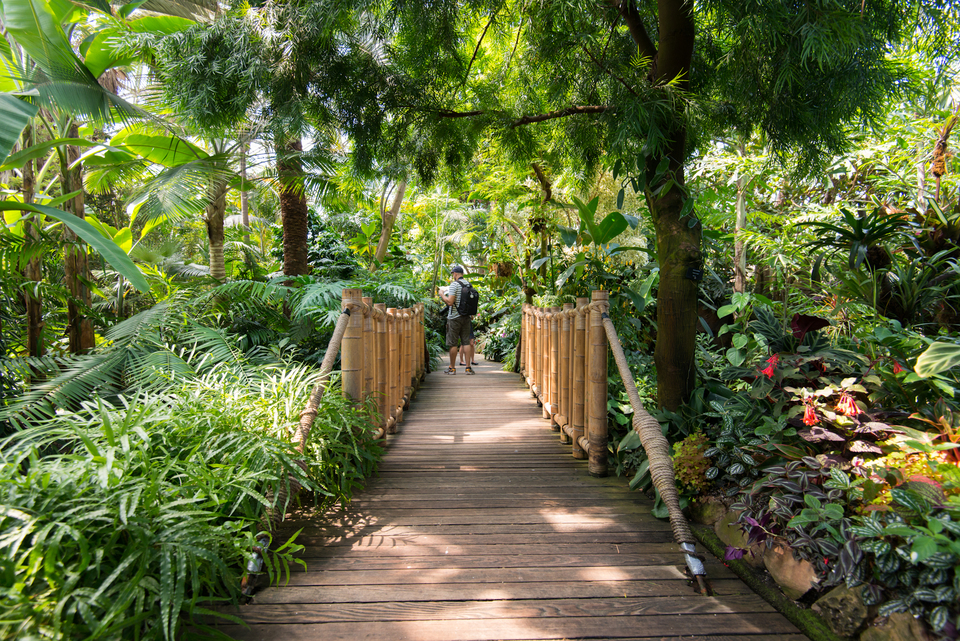 Bloedel Floral Conservatory In Vancouver Photo Essay