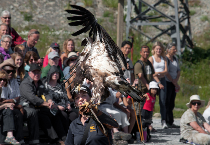 Birds of Prey Show Golden Eagle