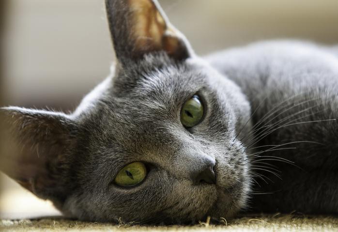 Cat by Roger Luijten