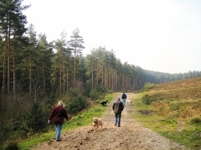 Walking the Dogs by Steve Parker