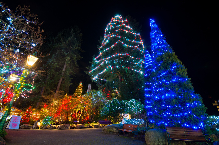 Capilano Suspension Christmas Light7