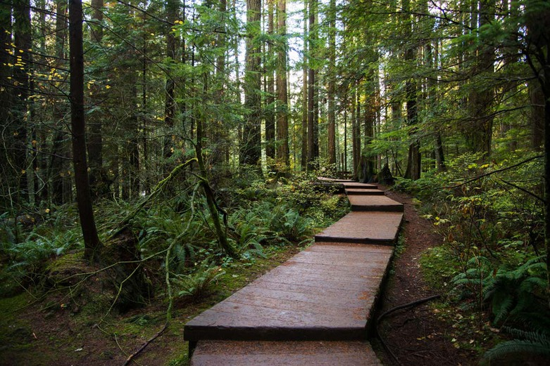 Baden Powell Trail in Lynn Canyon Park