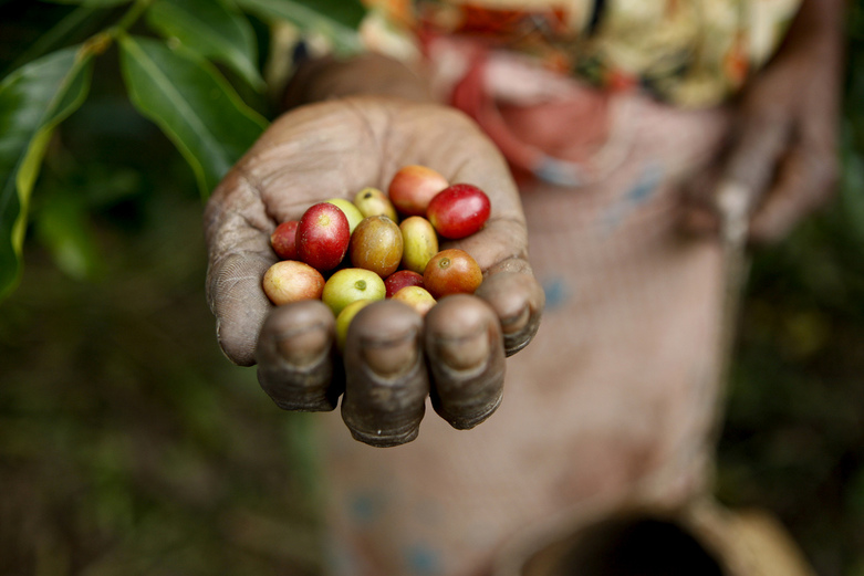 Coffee beans by United Nations Photo