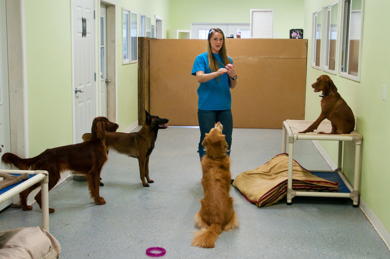 Both grils from A Dogs Life K9 Center are working also as the dog trainers