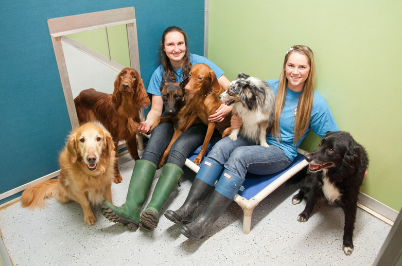 Dogs Lige K9 Centre  Happy Dogs with Kira and Elisha