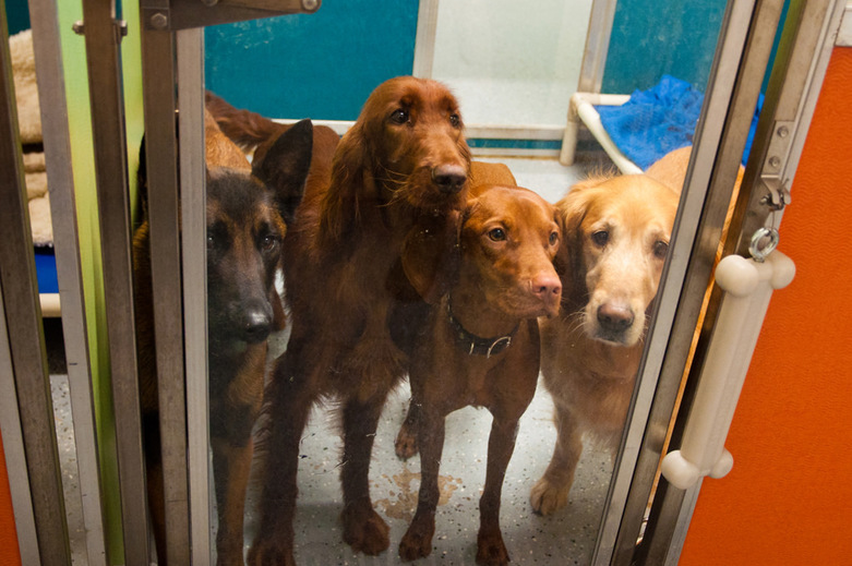 Dogs in Dogs Life K9 Center