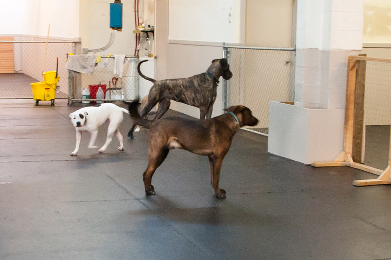 Dogs in Ruff Stuff Center