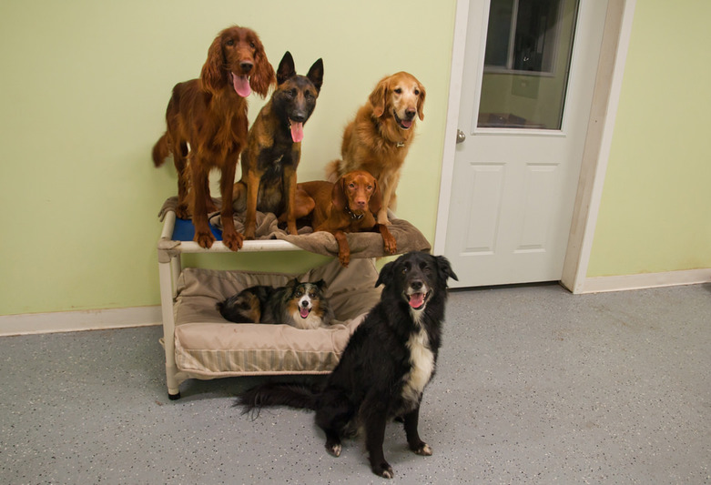 Happy Dogs from A Dogs Life K9 Center