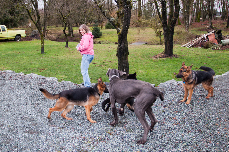Karen taking the dogs for a walk Sinburg Kennels