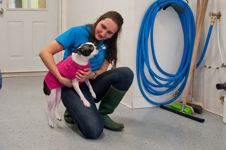 Small French Bulldog in A Dogs Life K9 Center