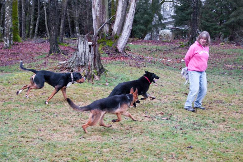 Training with Karen in Sinburg Kennels