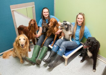Top 5 Dog Boarding Facilities in Vancouver