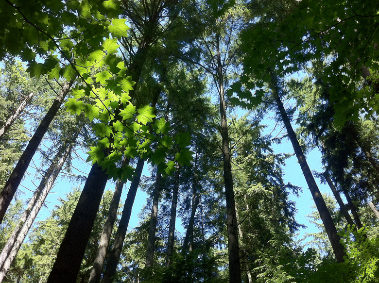 Trees In Pacific Spirit Regional Park By Irenelee