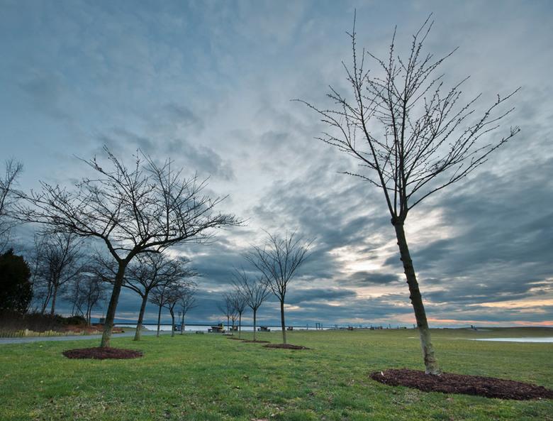 Richmond Garry Point Trees