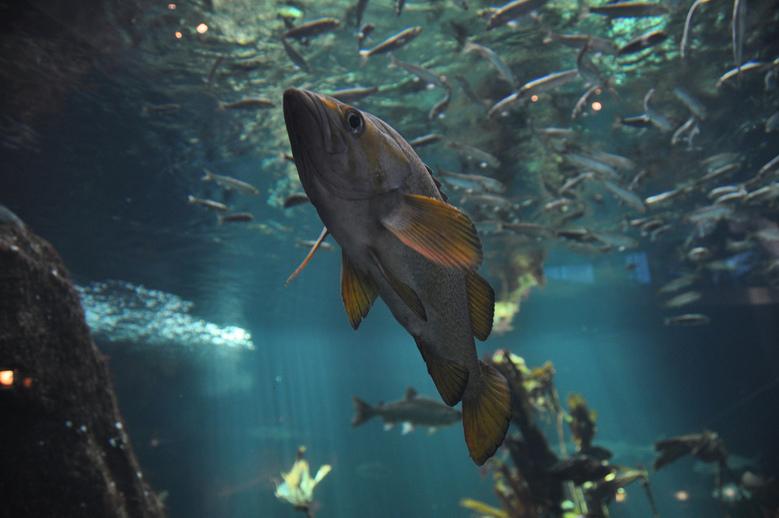Vancouver Aquarium by abdallah