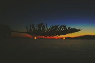 Flight of the Night
