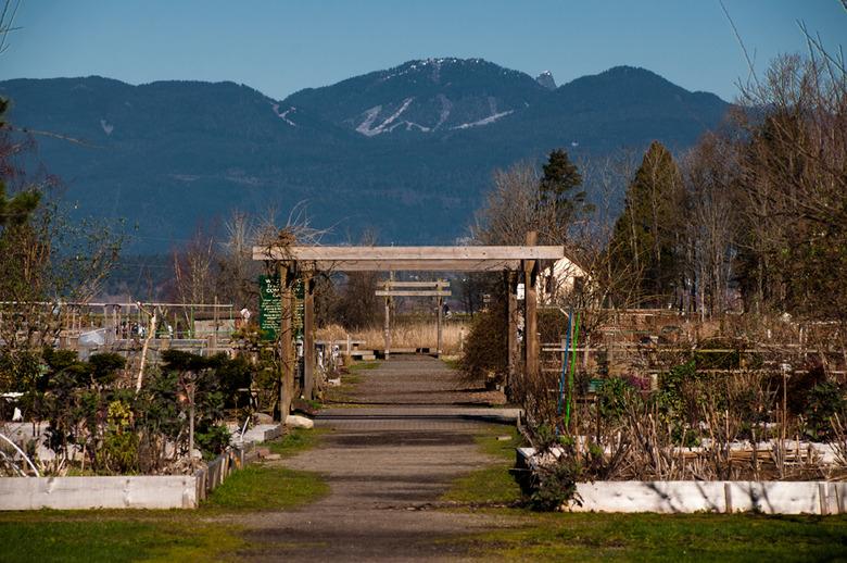 Rural Park Terra Nova Community Garden 1