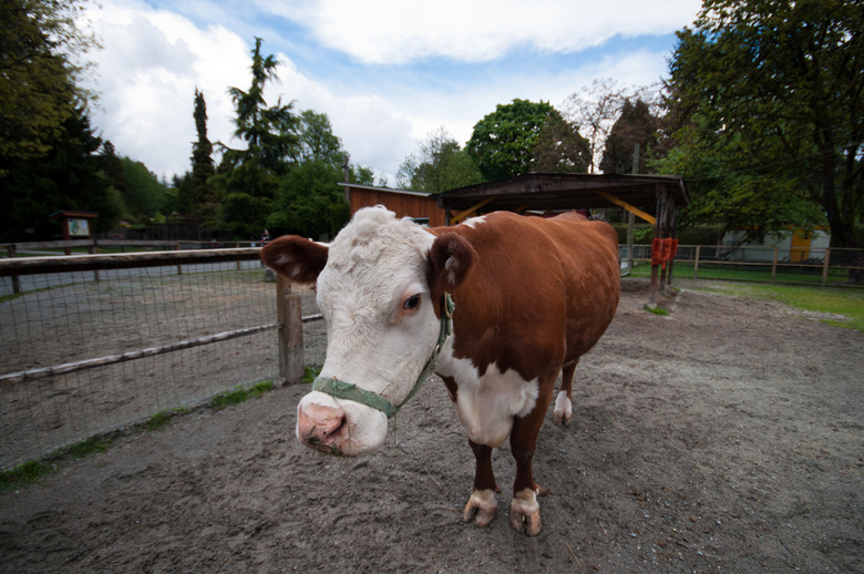 2 Visitors will have a chance to meet some new farm friends