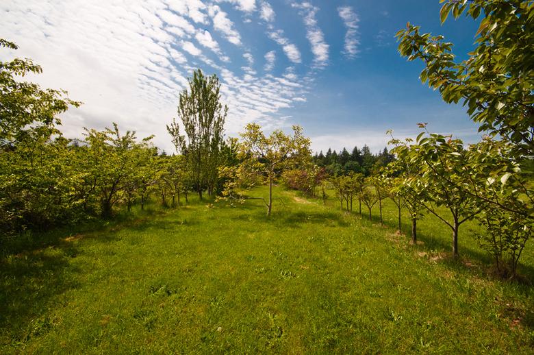 4 Garden Views