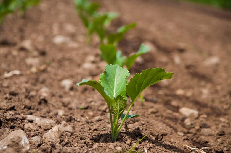 5 Growing Food