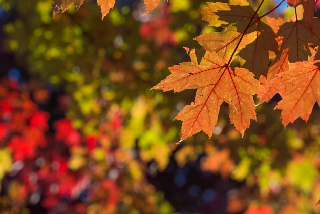 It-is-Fall-Really-by-Kenny-Louie
