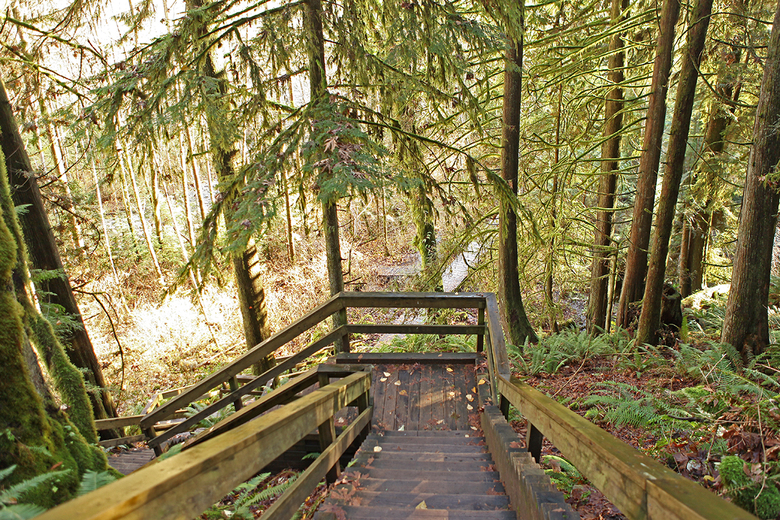 inside the lynn canyon park 2