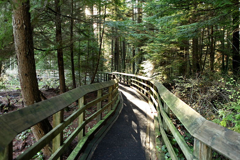 inside the pacific spirit park 3