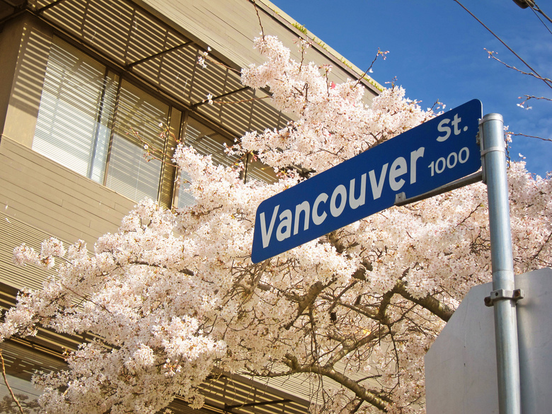 Vancouver street and blossoms by Nick Kenrick