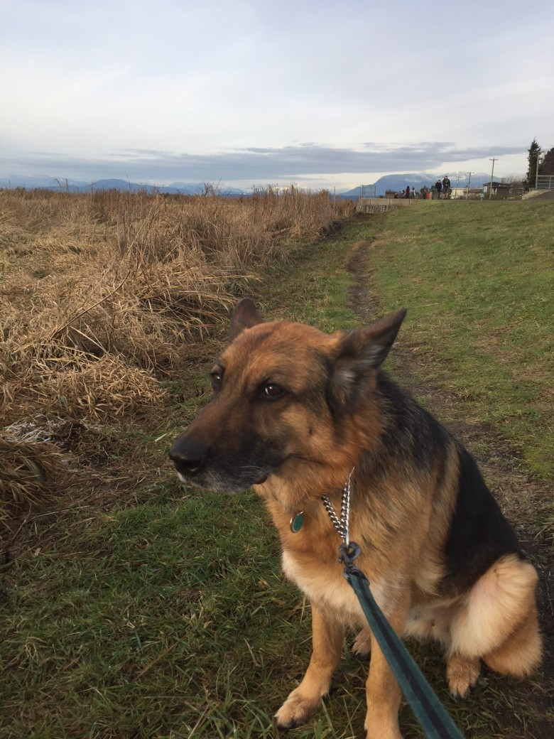 Effi at Garry Point Park, Steveston December 2016