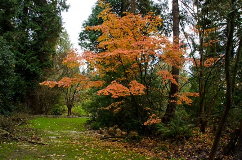UBC_Botanical_Gardens-3