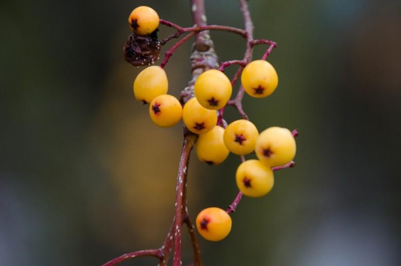 UBC_Botanical_Gardens-9