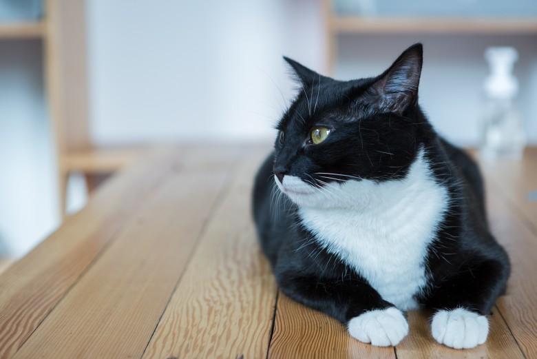 16-catfe