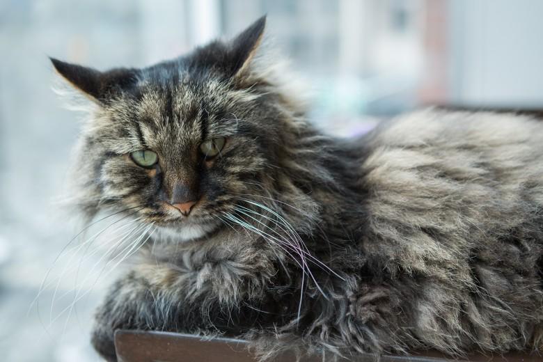20-catfe