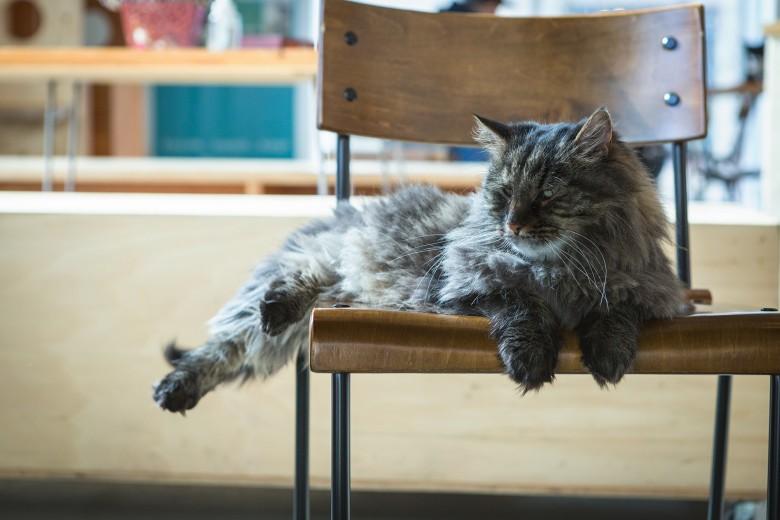 7-catfe