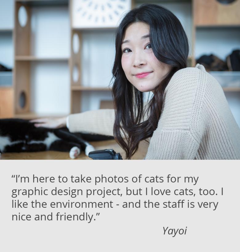 catfe-yayoi